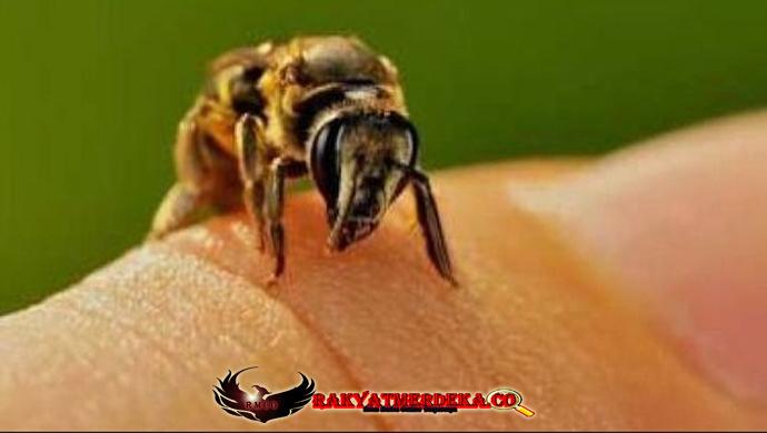 6 Tips Agar Dapat Terhindar Dari Sengatan Lebah Saat Beraktivitas Diluar