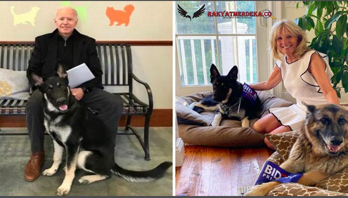 Joe Biden Keseleo Saat Bermain dengan Anjingnya, Langsung Di-rontgen