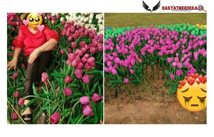Bunga Tulip Buatan Rusak karena Ulah Pengunjung, Pengelola Sabar Ingatkan