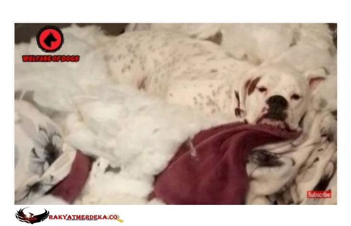 Kenalan dengan Cooper, Si Anjing Paling Nakal di Inggris
