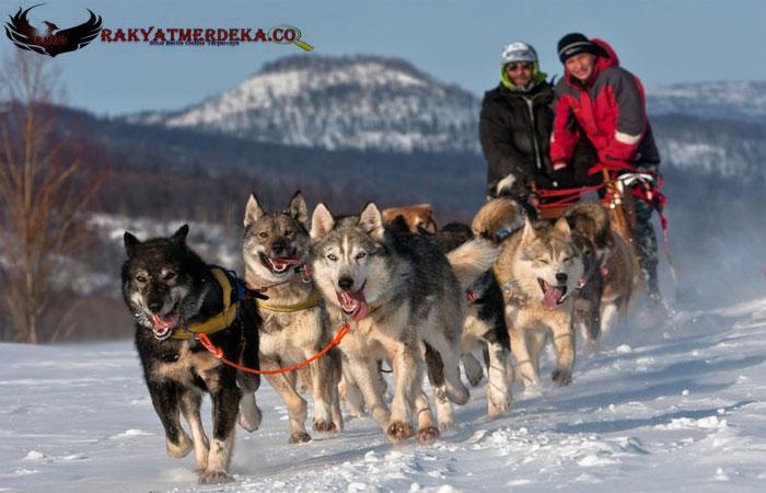 Lebih dari 23.000 Tahun Lalu Anjing telah Jadi Jinak dan Temani Manusia Bermigrasi