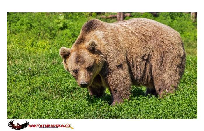 Makan 5 Ribu Kalori Setiap Hari, Pria Ini Ingin Punya Tubuh Sebesar Beruang